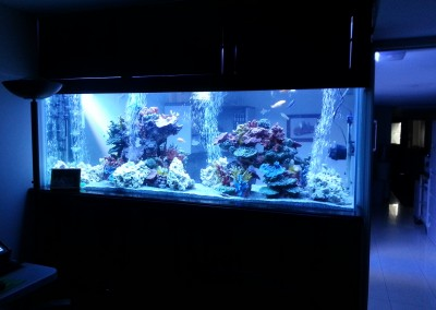 280 gallon custom glass aquarium fish tank