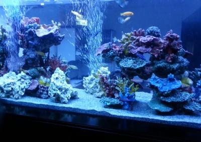 300 custom aquarium glass fishtank