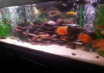 Lakeview fish tank