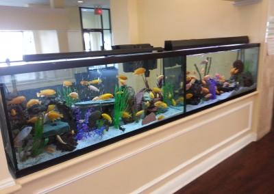 Nursing home fishtank